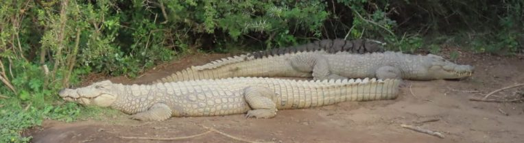 cropped-crocs.jpg